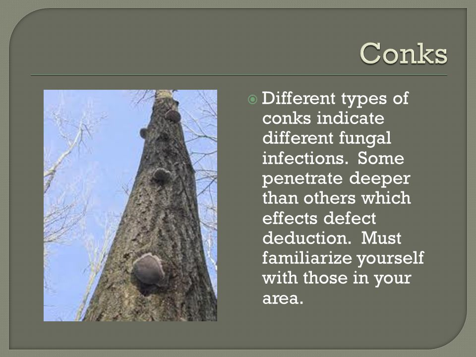  Different types of conks indicate different fungal infections.