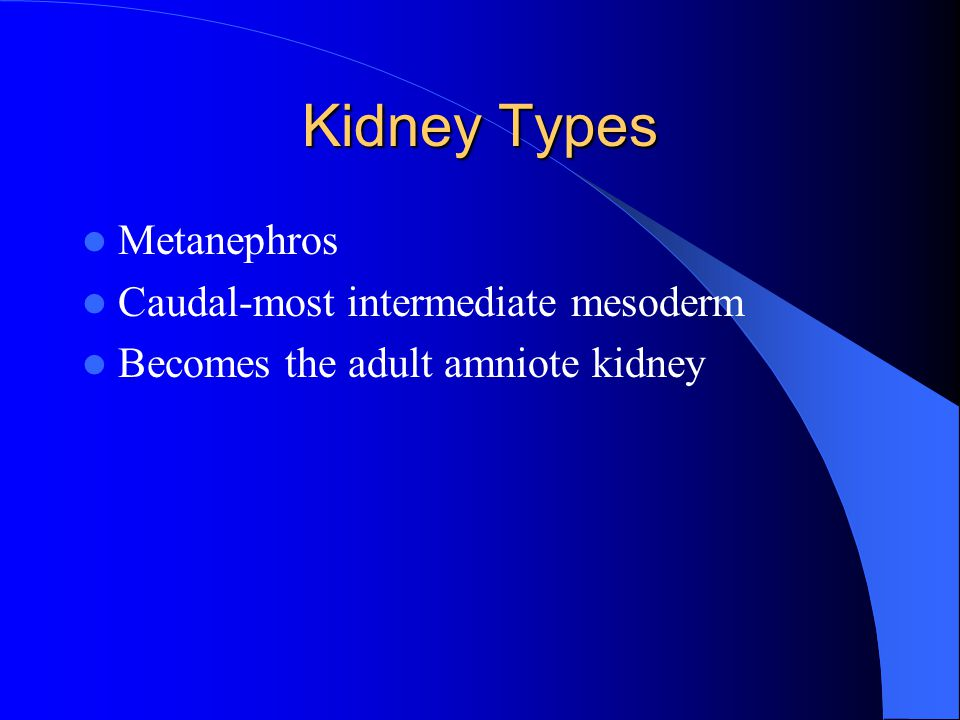 Kidney Types Metanephros Caudal-most intermediate mesoderm Becomes the adult amniote kidney