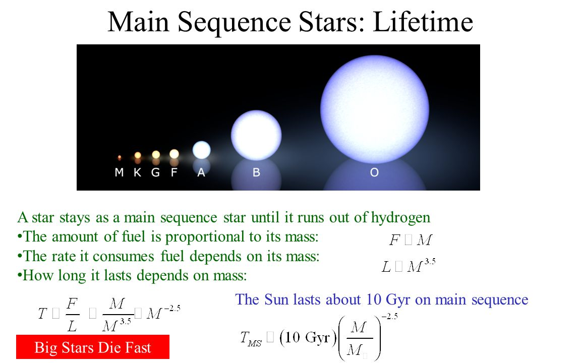 Main Sequence Stars: Mass Dependance Everything about the star depends on mass Higher mass stars have: Larger radius Somewhat higher temperature Much