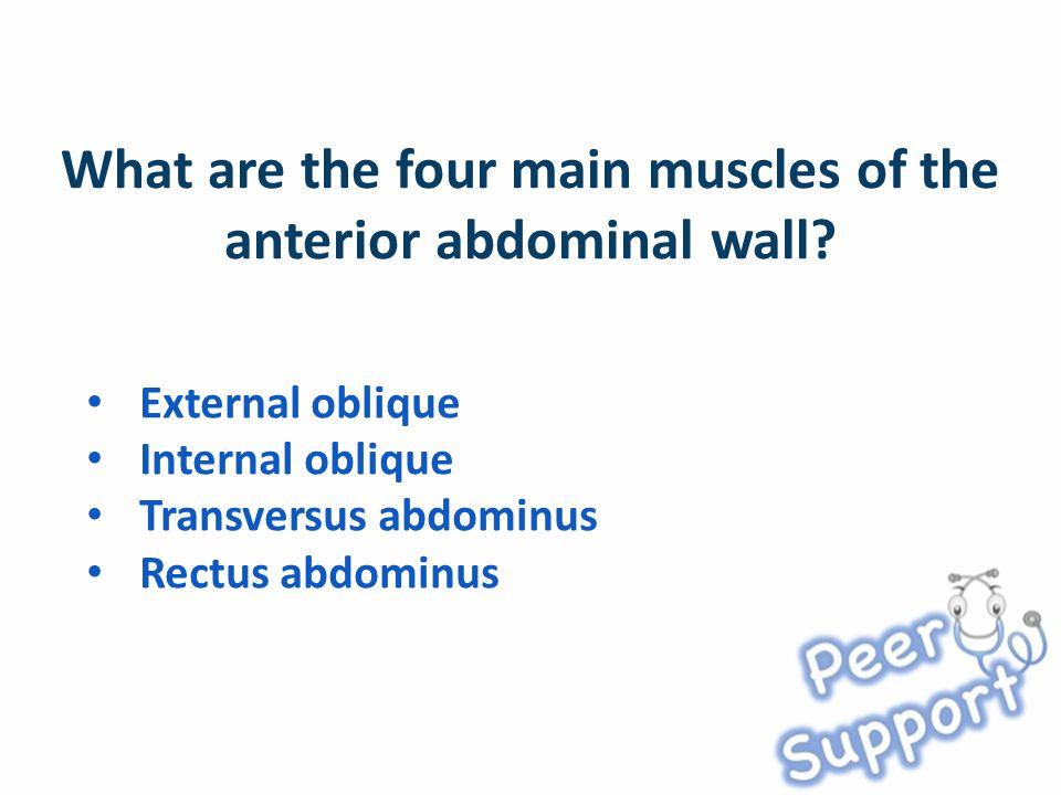 External oblique Internal oblique Transversus abdominus Rectus abdominus