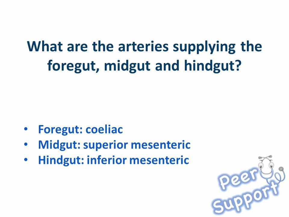 Foregut: coeliac Midgut: superior mesenteric Hindgut: inferior mesenteric