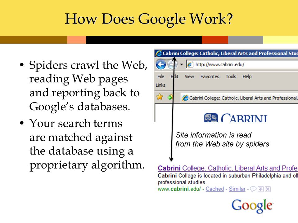 How Does Google Work? Spiders crawl the Web, reading Web pages and reporting back to Google's databases. Your search terms are matched against the dat