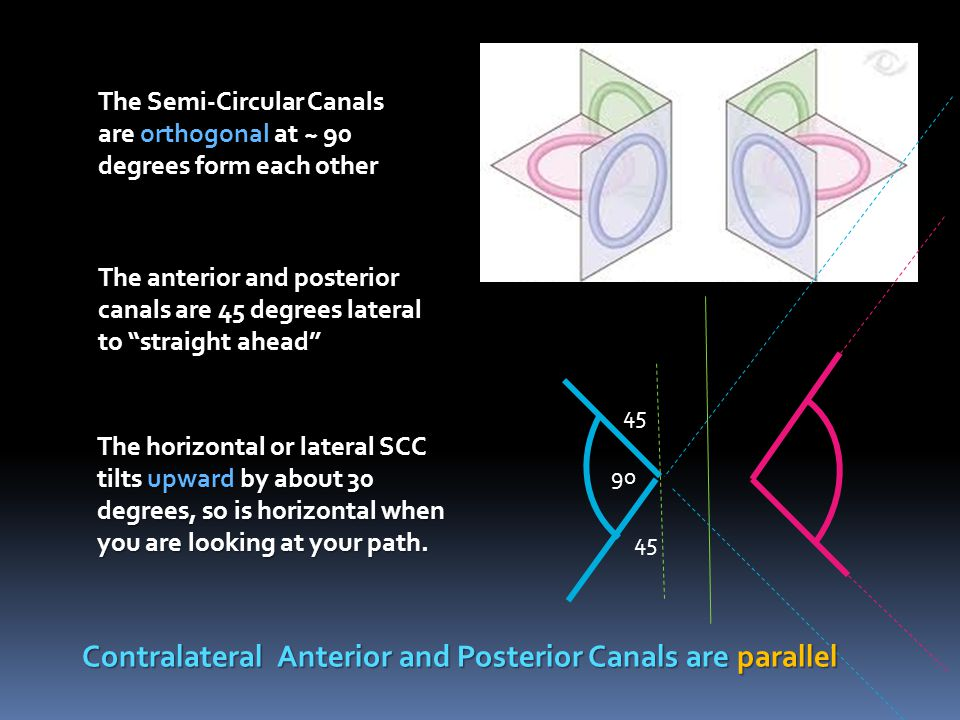 "The Semi-Circular Canals are orthogonal at ~ 90 degrees form each other The anterior and posterior canals are 45 degrees lateral to ""straight ahead"" T"