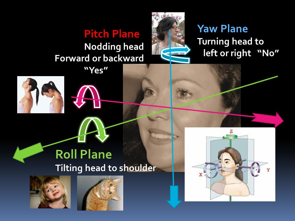 "Roll Plane Tilting head to shoulder Yaw Plane Turning head to left or right ""No"" left or right ""No"" Pitch Plane Nodding head Forward or backward ""Yes"""