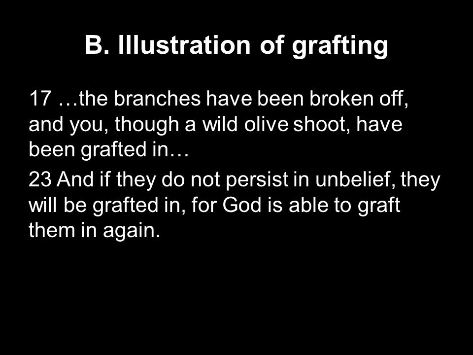 B. Illustration of grafting 17 …the branches have been broken off, and you, though a wild olive shoot, have been grafted in… 23 And if they do not per