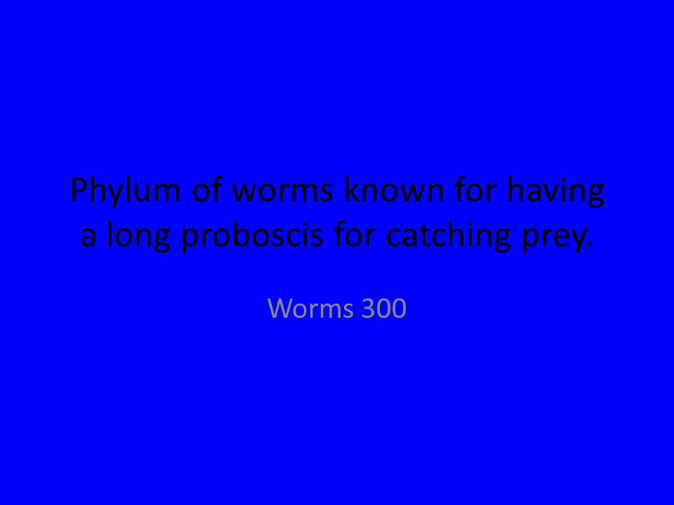 Phylum of worms known for having a long proboscis for catching prey. Worms 300