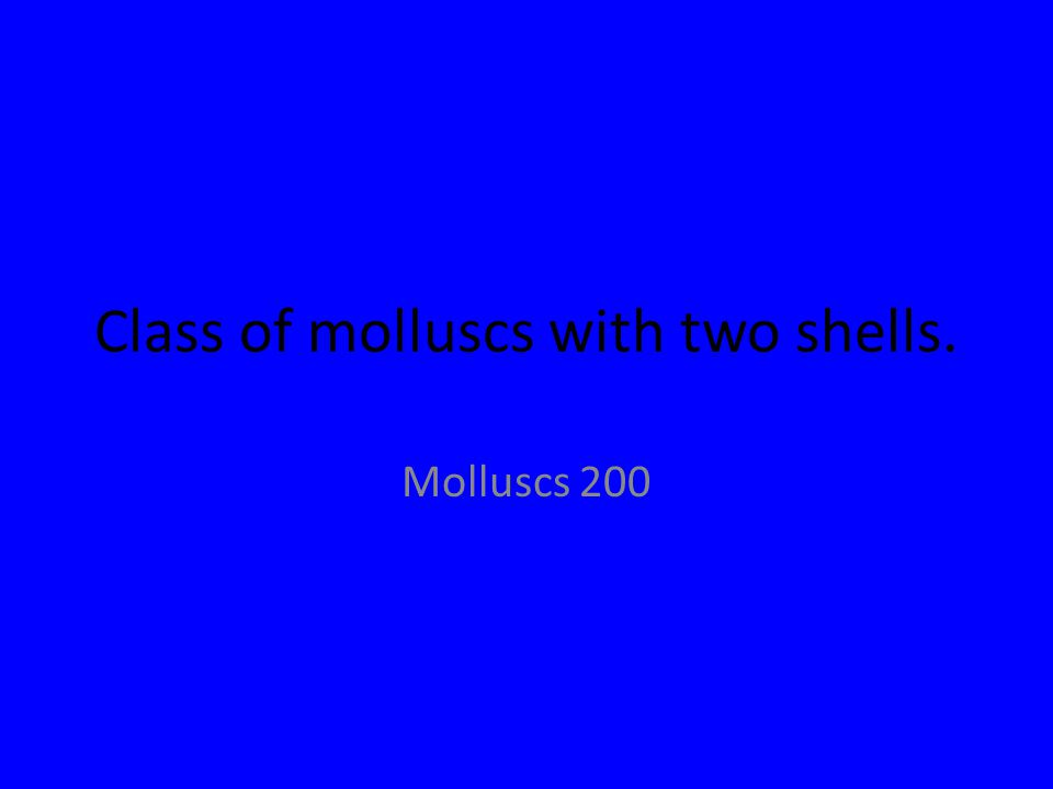 Class of molluscs with two shells. Molluscs 200
