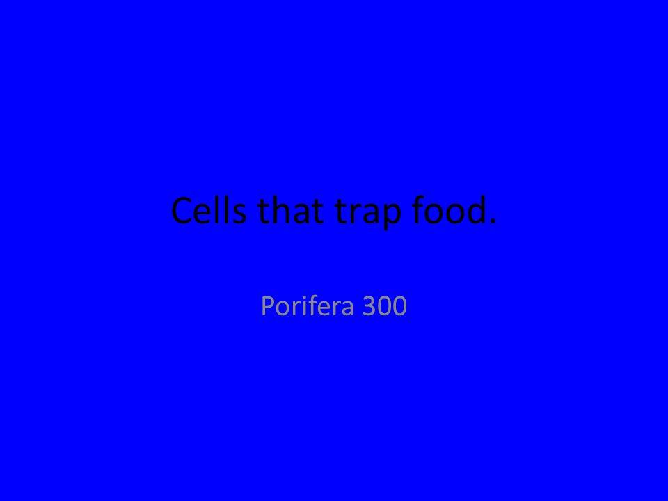 Cells that trap food. Porifera 300