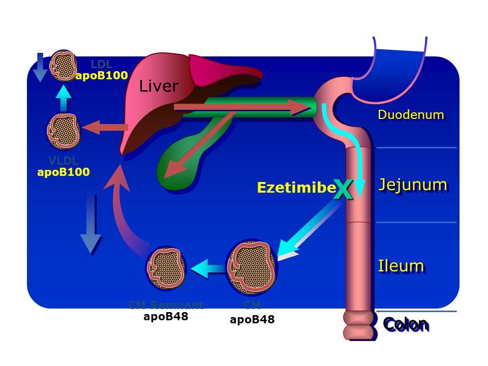 37 Cholesterol torsHo DuodenumDuodenum JejunumJejunum IleumIleum CM apoB48 Liver CM Remnant apoB48 VLDL apoB100 EzetimibeX LDL apoB100 ColonColon