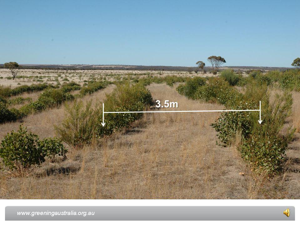www.greeningaustralia.org.au 3.5m