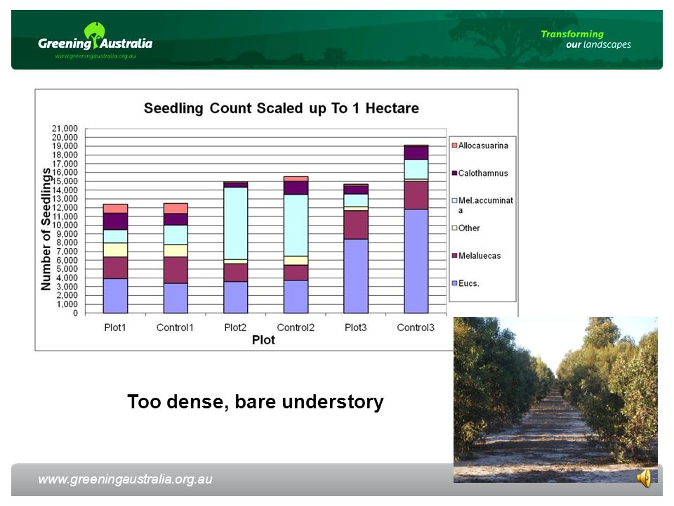 www.greeningaustralia.org.au Too dense, bare understory