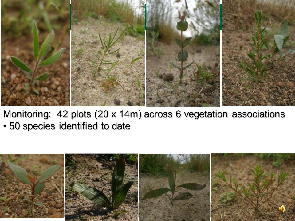www.greeningaustralia.org.au 41 Monitoring: 42 plots (20 x 14m) across 6 vegetation associations 50 species identified to date 50 species identified to date