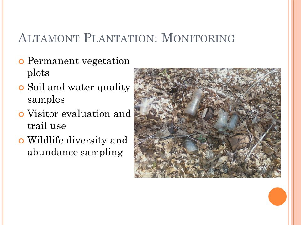 A LTAMONT P LANTATION : M ONITORING Permanent vegetation plots Soil and water quality samples Visitor evaluation and trail use Wildlife diversity and abundance sampling
