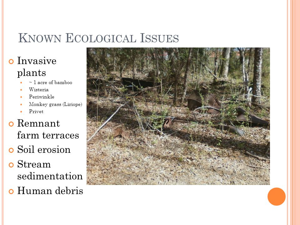 K NOWN E COLOGICAL I SSUES Invasive plants ~ 1 acre of bamboo Wisteria Periwinkle Monkey grass (Liriope) Privet Remnant farm terraces Soil erosion Stream sedimentation Human debris