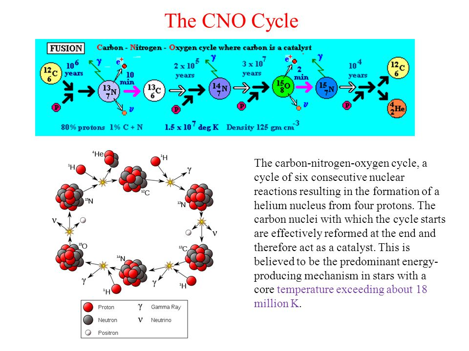 The CNO Cycle The carbon-nitrogen-oxygen cycle, a cycle of six consecutive nuclear reactions resulting in the formation of a helium nucleus from four protons.
