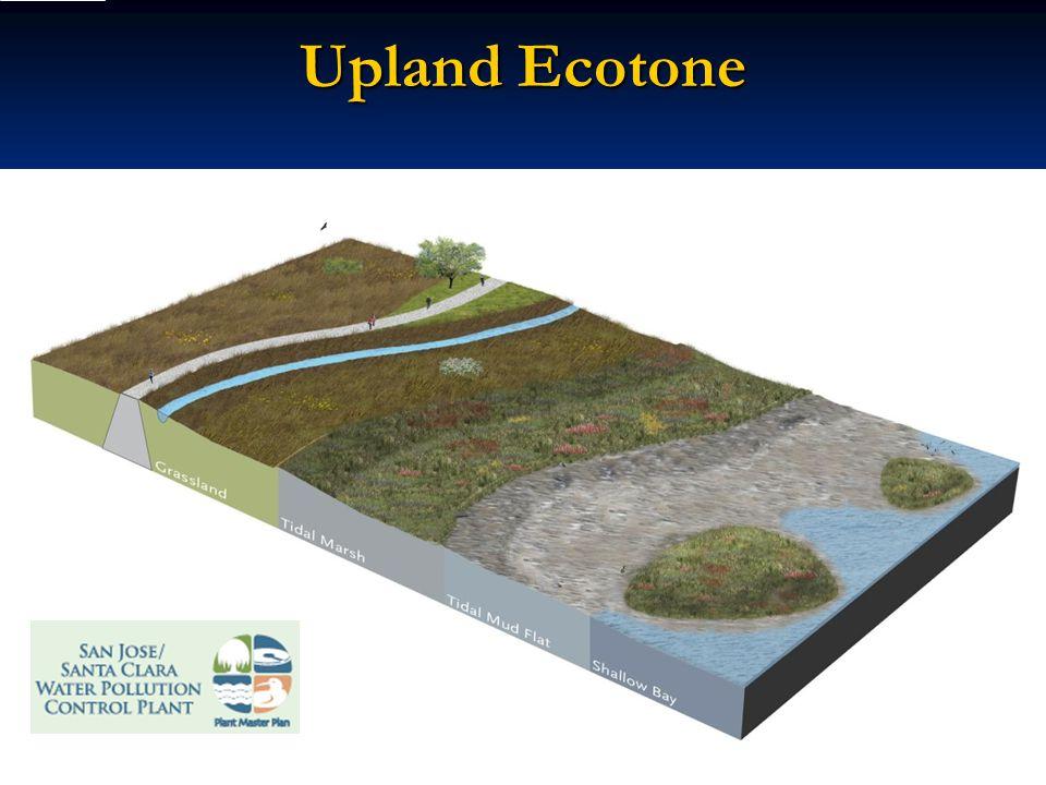 Upland Ecotone ::: Hargreaves Associates :::