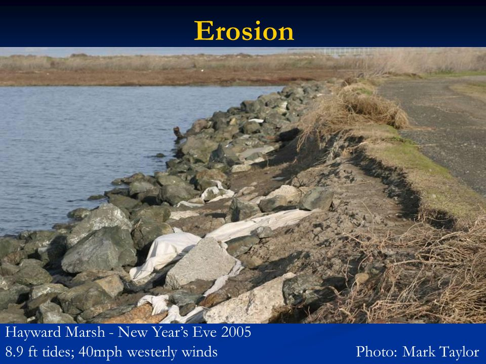 Erosion Hayward Marsh - New Year's Eve 2005 8.9 ft tides; 40mph westerly winds Photo: Mark Taylor