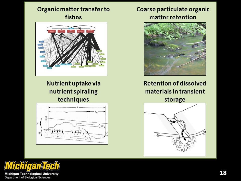 18 Organic matter transfer to fishes Coarse particulate organic matter retention Retention of dissolved materials in transient storage Nutrient uptake via nutrient spiraling techniques