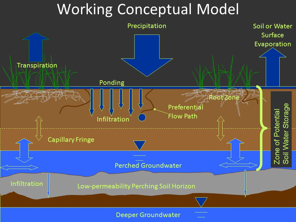 Perched Groundwater Working Conceptual Model Low-permeability Perching Soil Horizon Precipitation Transpiration Capillary Fringe Root Zone Ponding Infiltration Preferential Flow Path Soil or Water Surface Evaporation Zone of Potential Soil Water Storage Infiltration Deeper Groundwater