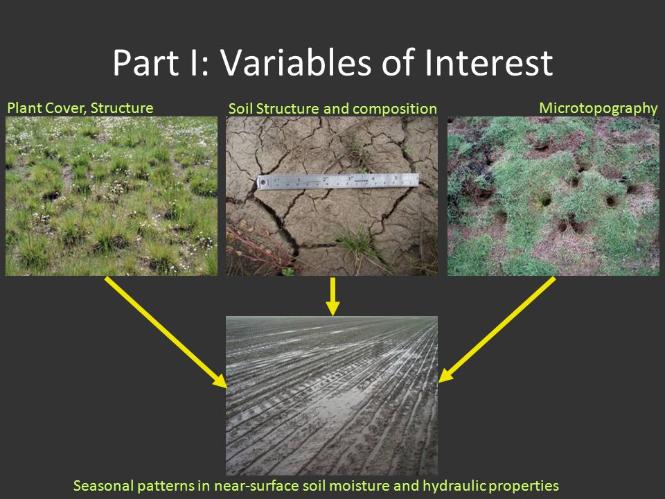 Part I: Variables of Interest Plant Cover, Structure Soil Structure and composition Microtopography Seasonal patterns in near-surface soil moisture and hydraulic properties