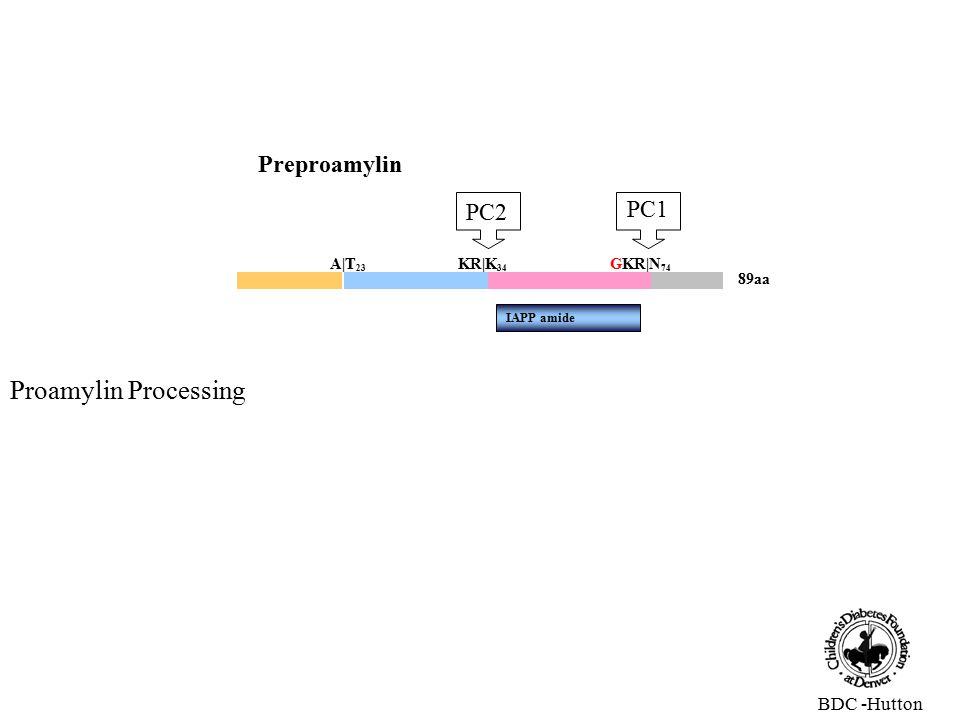 89aa Preproamylin A|T 23 KR|K 34 GKR|N 74 IAPP amide PC1 PC2 Proamylin Processing BDC -Hutton