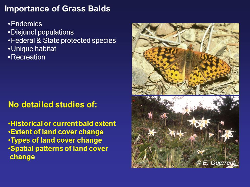 Importance of Grass Balds Endemics Disjunct populations Federal & State protected species Unique habitat Recreation © E.