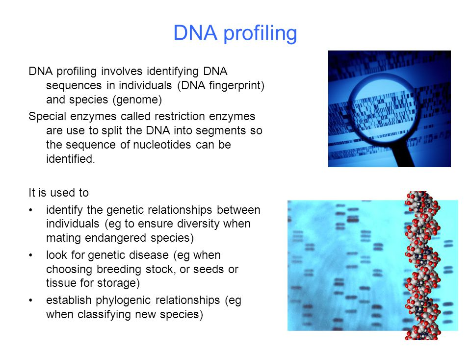DNA profiling DNA profiling involves identifying DNA sequences in individuals (DNA fingerprint) and species (genome) Special enzymes called restriction enzymes are use to split the DNA into segments so the sequence of nucleotides can be identified.