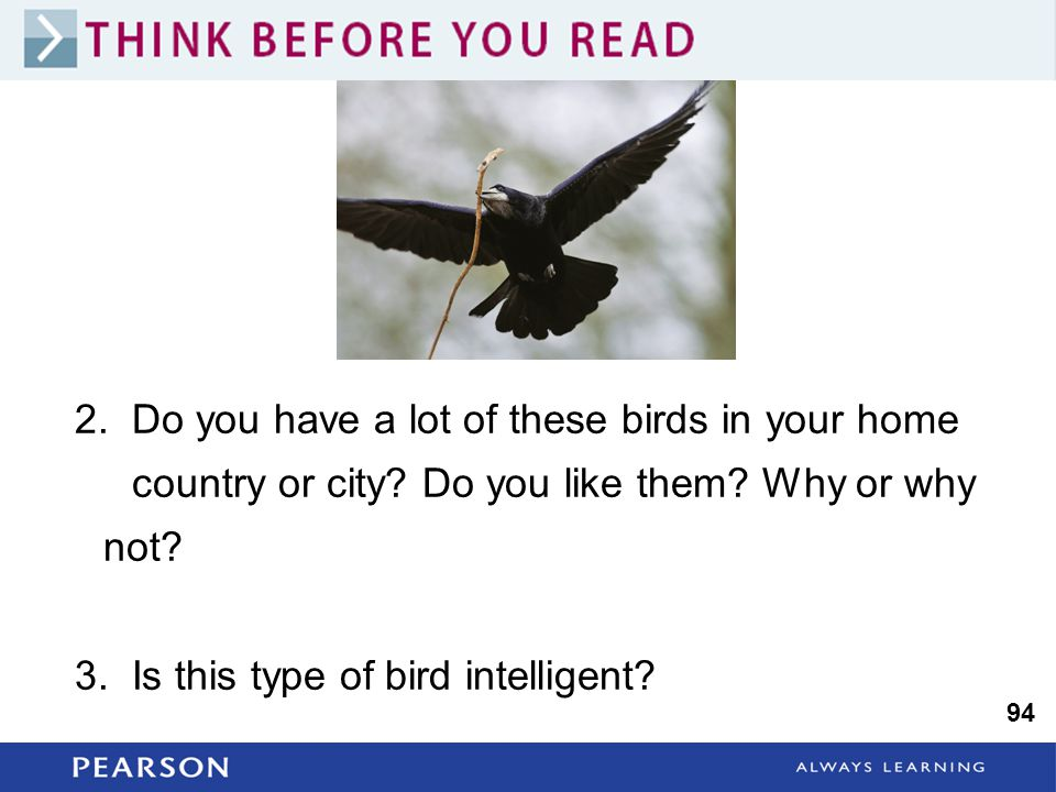 2. Do you have a lot of these birds in your home country or city.