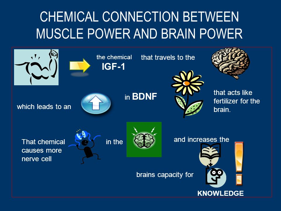 CHEMICAL CONNECTION BETWEEN MUSCLE POWER AND BRAIN POWER the chemical IGF-1 that travels to the which leads to an in BDNF that acts like fertilizer for the brain.