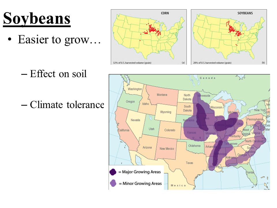 Soybeans Easier to grow… – Effect on soil – Climate tolerance