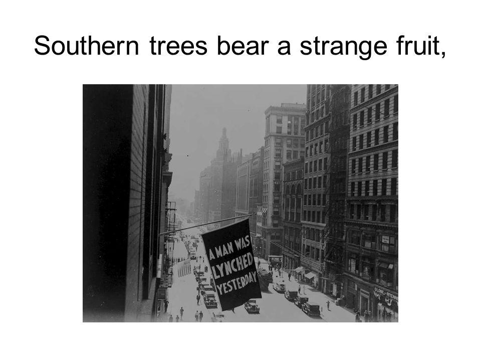 Southern trees bear a strange fruit,