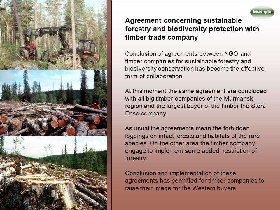 Agreement concerning sustainable forestry and biodiversity protection with timber trade company Conclusion of agreements between NGO and timber companies for sustainable forestry and biodiversity conservation has become the effective form of collaboration.