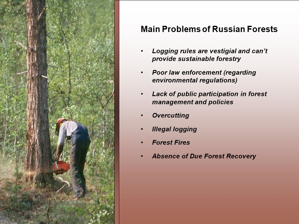 Main Problems of Russian Forests Logging rules are vestigial and can't provide sustainable forestry Poor law enforcement (regarding environmental regulations) Lack of public participation in forest management and policies Overcutting Illegal logging Forest Fires Absence of Due Forest Recovery