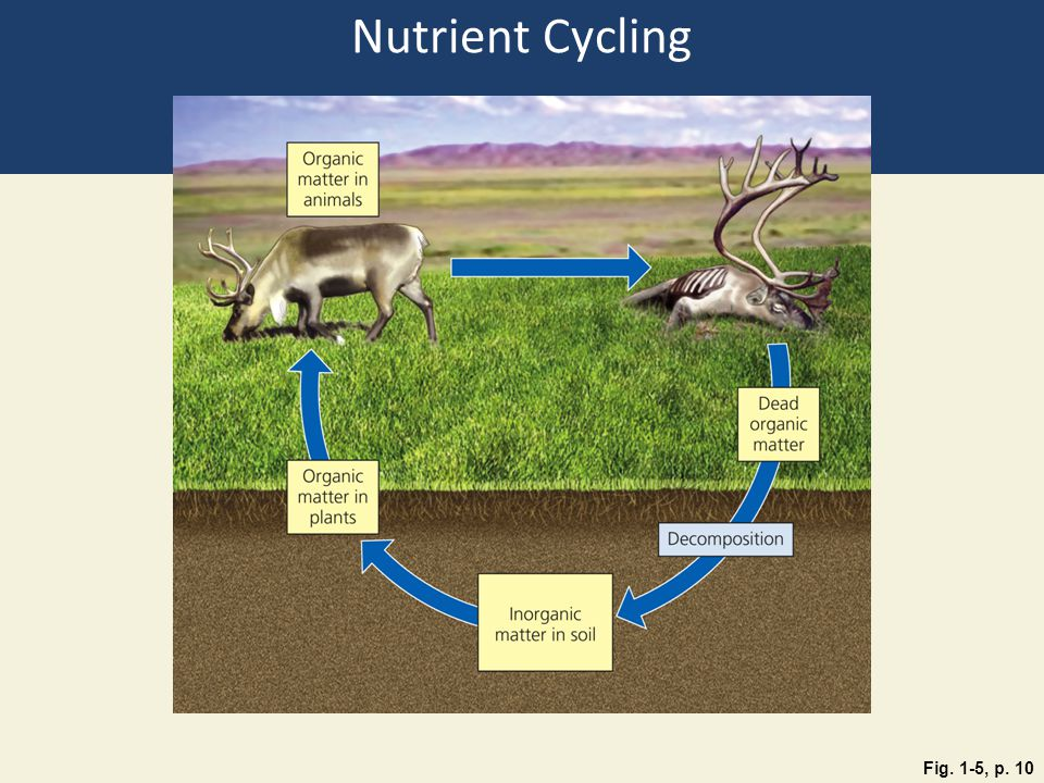 Nutrient Cycling Fig. 1-5, p. 10