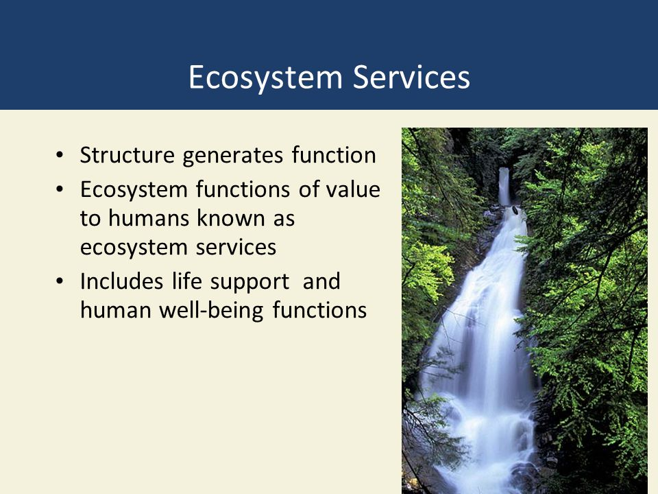 Ecosystem Services Structure generates function Ecosystem functions of value to humans known as ecosystem services Includes life support and human wel