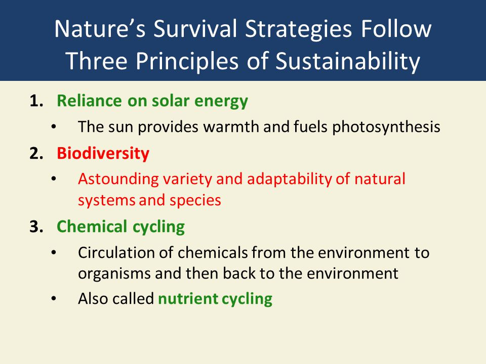 Nature's Survival Strategies Follow Three Principles of Sustainability 1.Reliance on solar energy The sun provides warmth and fuels photosynthesis 2.B