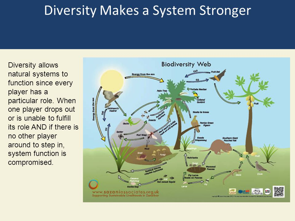 There is still a lot to figure out about ecosystem services What services are most managed.