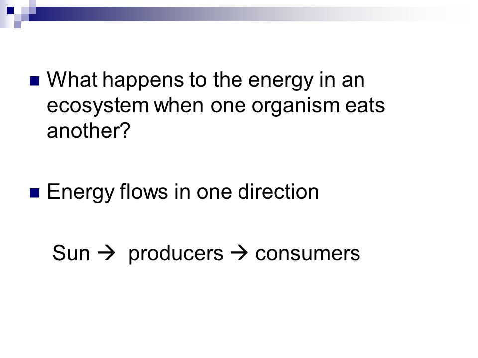 What happens to the energy in an ecosystem when one organism eats another? Energy flows in one direction Sun  producers  consumers