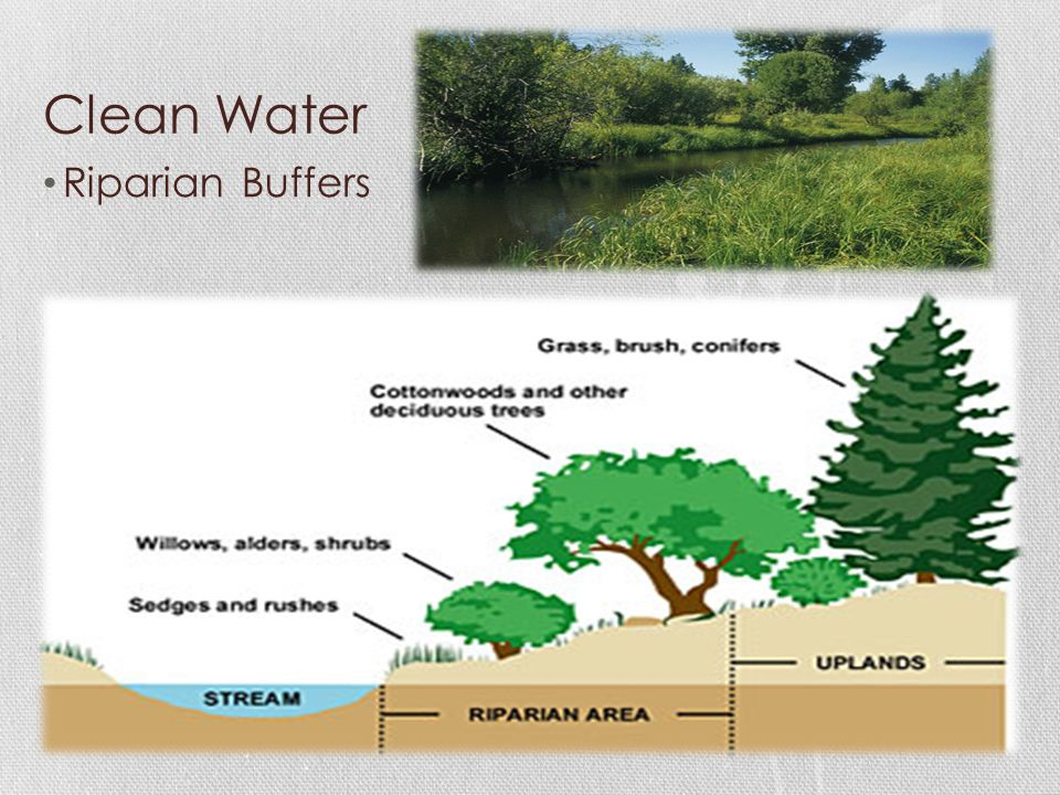 Clean Water Riparian Buffers