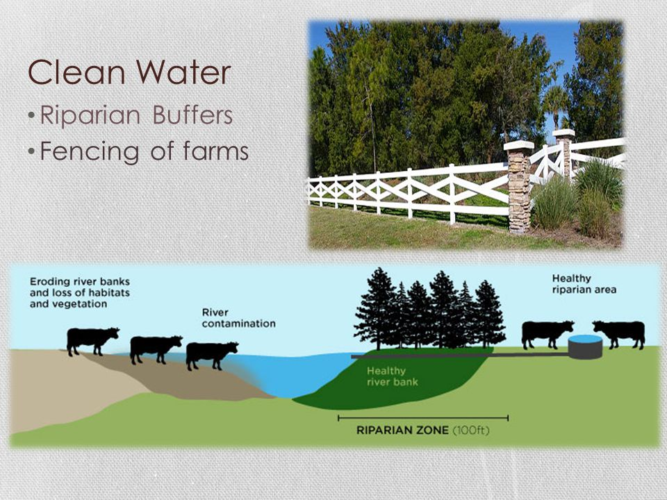 Clean Water Riparian Buffers Fencing of farms