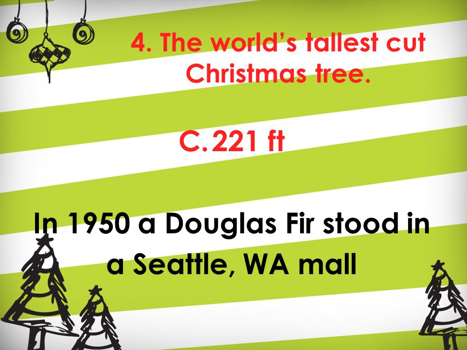 4. The world's tallest cut Christmas tree. C.