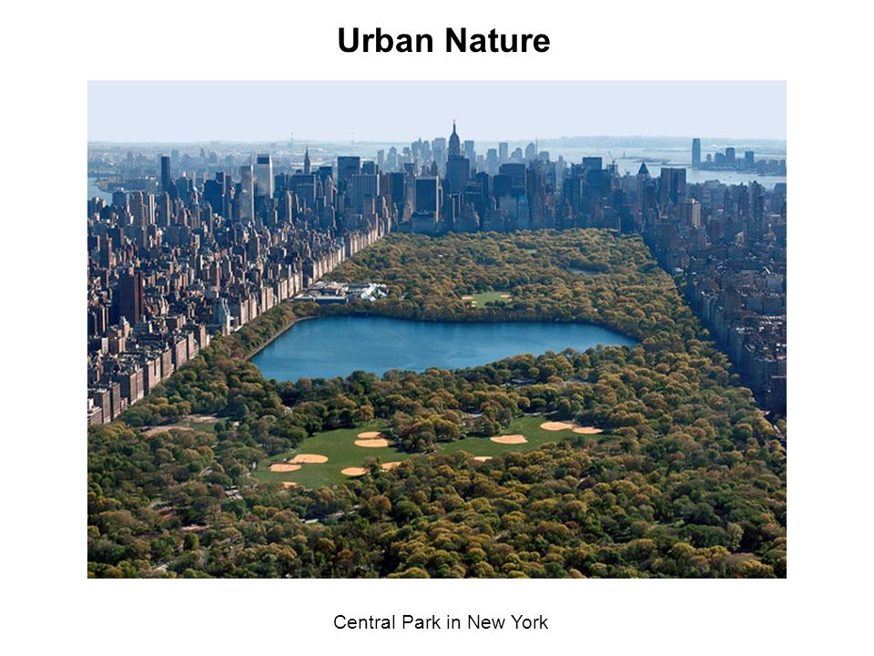 Central Park in New York Urban Nature