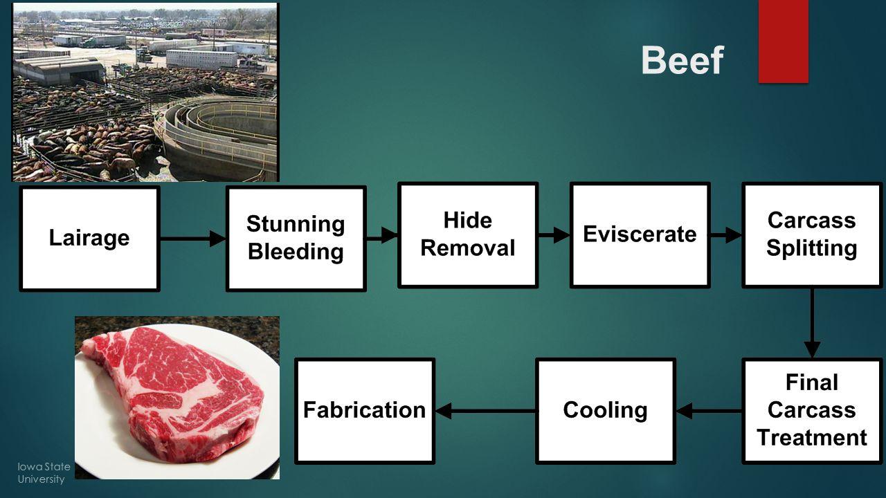 Beef Iowa State University