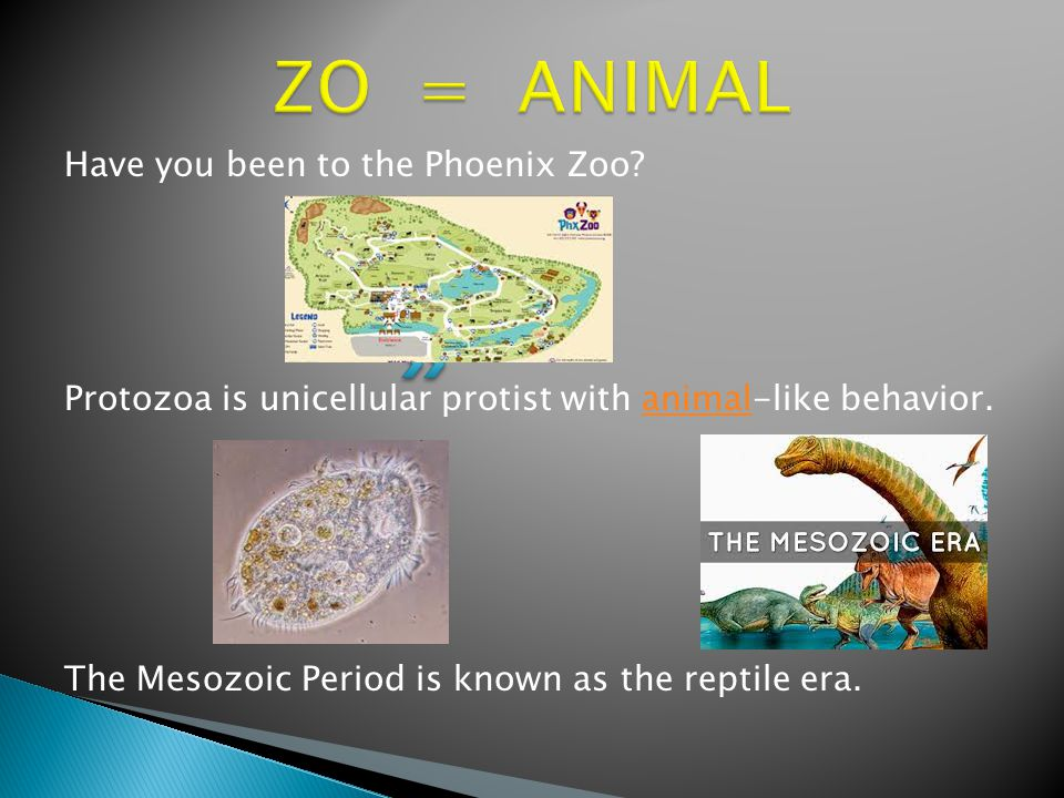Have you been to the Phoenix Zoo.