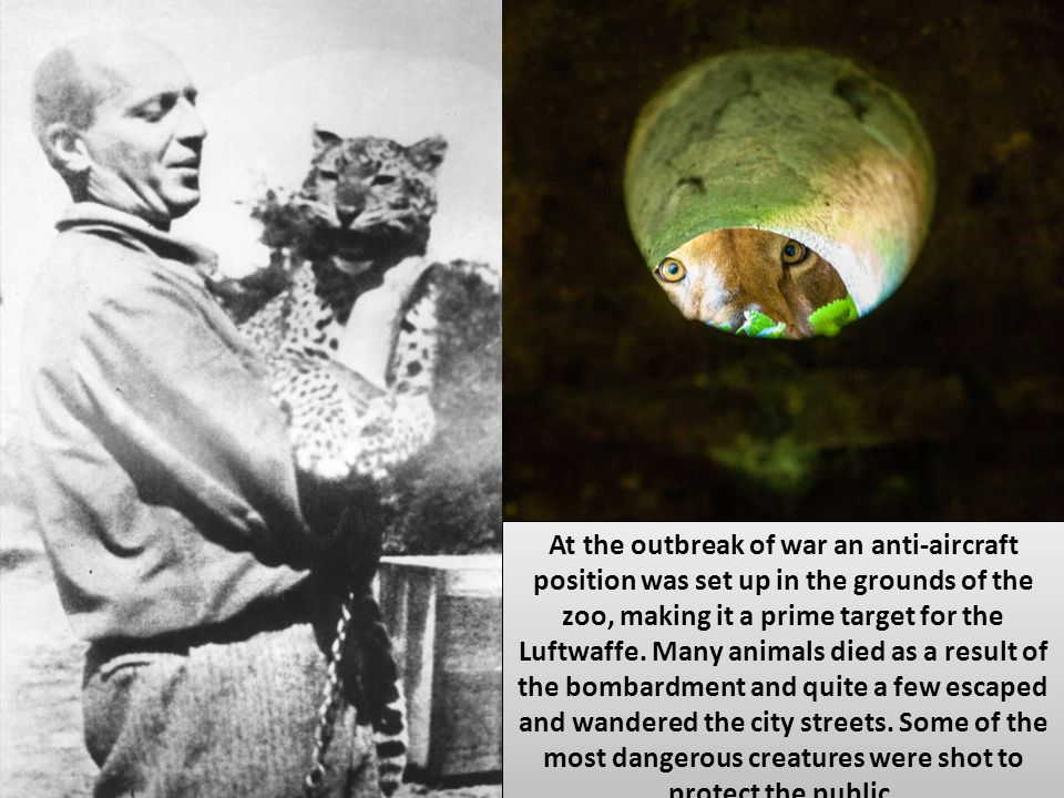 At the outbreak of war an anti-aircraft position was set up in the grounds of the zoo, making it a prime target for the Luftwaffe. Many animals died a