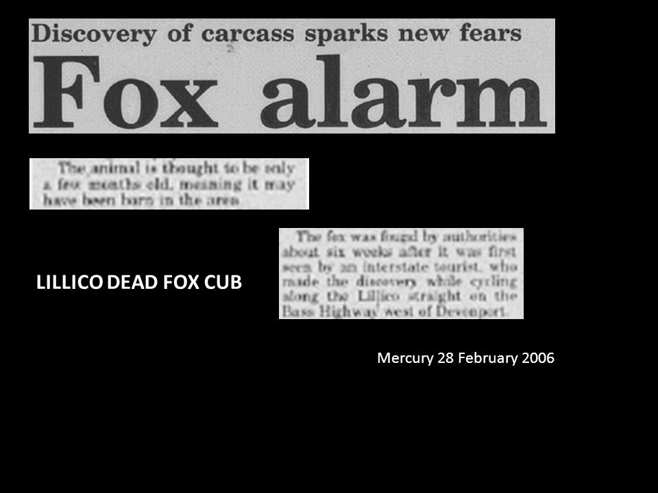 Mercury 28 February 2006 LILLICO DEAD FOX CUB