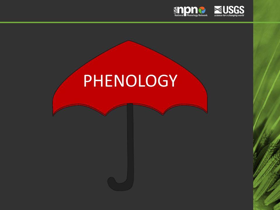 PHENOLOGY