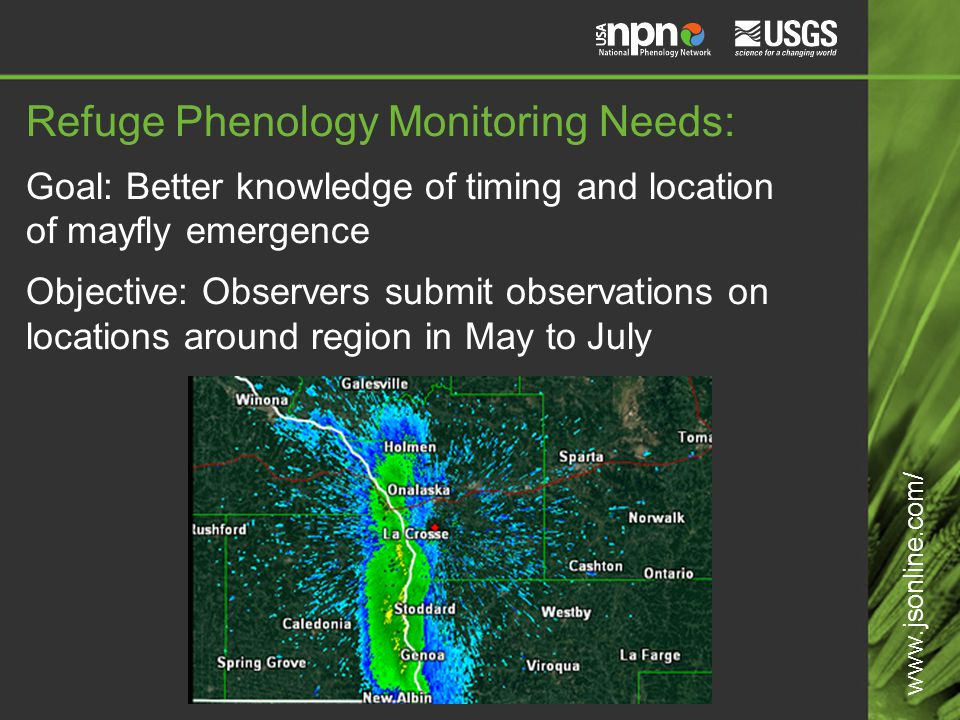 Refuge Phenology Monitoring Needs: Goal: Better knowledge of timing and location of mayfly emergence Objective: Observers submit observations on locations around region in May to July www.jsonline.com/
