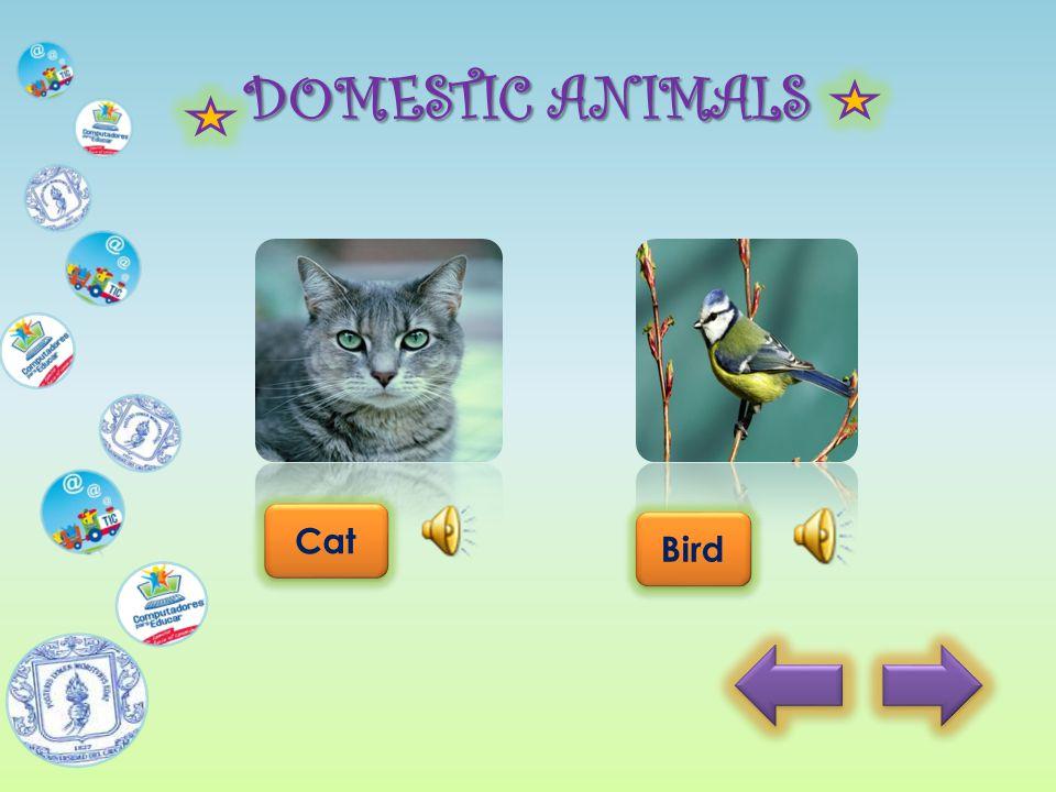 DOMESTIC ANIMALS Back Cat Bird