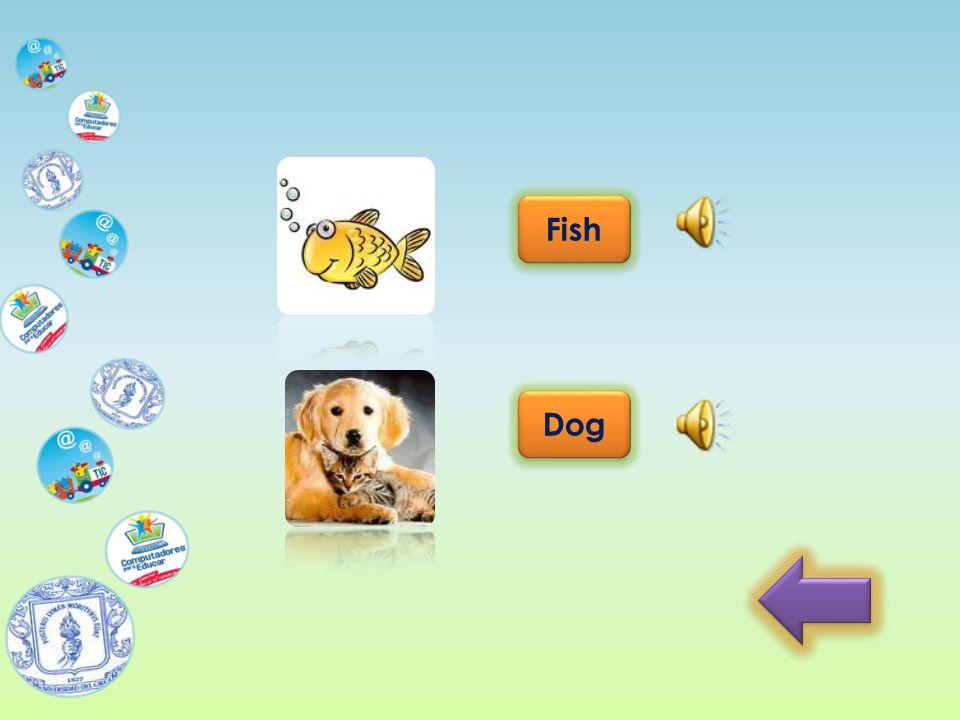 Fish Dog